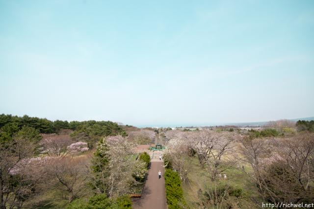もりまち桜祭り オニウシ公園 道の駅