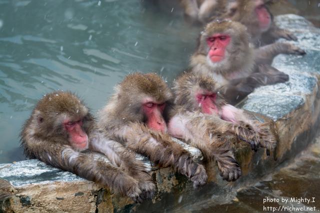 函館市熱帯植物園には、温泉好きの日本猿 サル