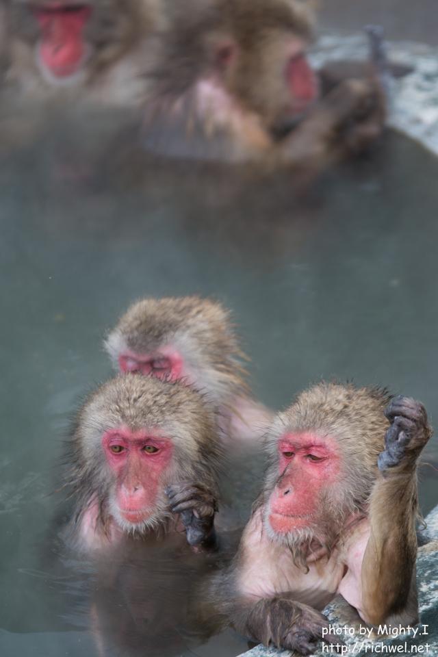 温泉 日本猿 函館