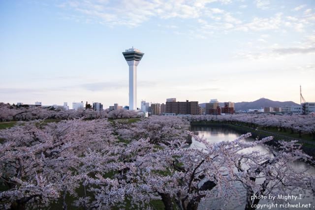 函館五稜郭 桜(さくら) 花見 五稜郭タワー