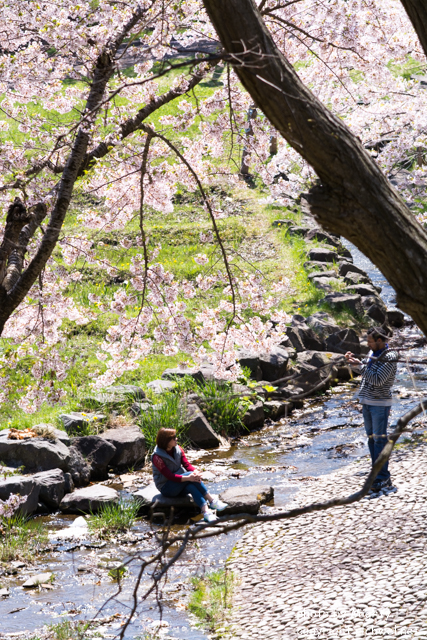 もりまち桜まつり 2016 歌謡ショーゲストは島谷ひとみ