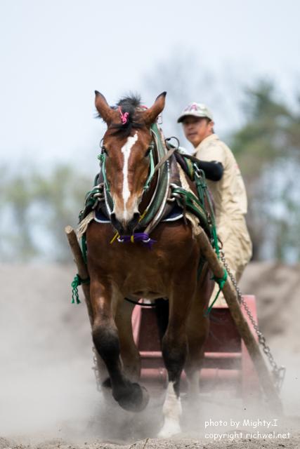 森町さくら祭り ばん馬競技大会 2016