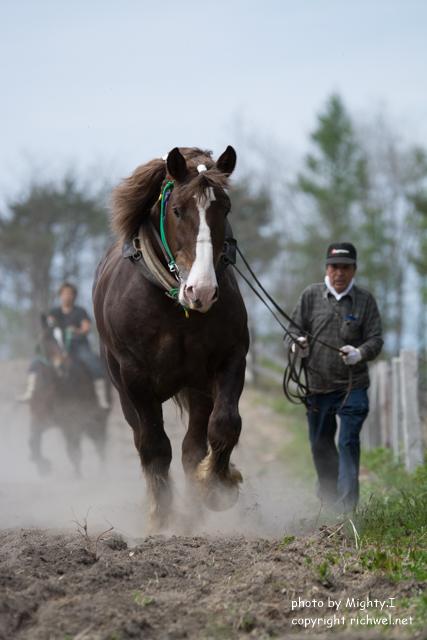 もりまち桜まつり ばん馬競技大会 2016