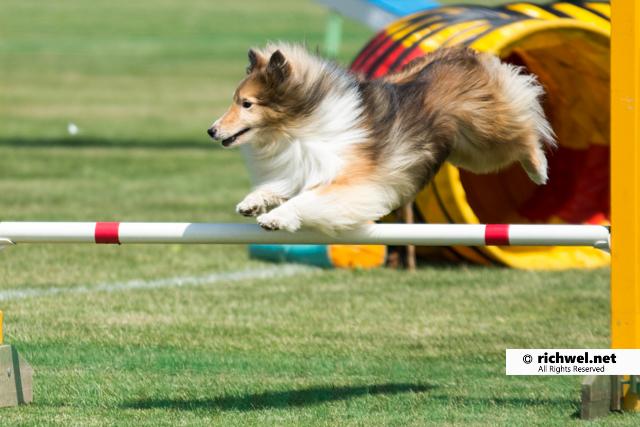 アジリティ競技観戦 恵庭 飛ぶ犬 フライング・ドック