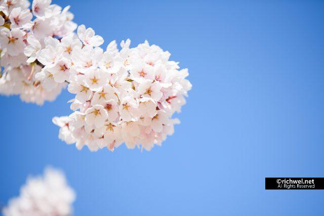 森町桜まつり2018 イベントスケジュール